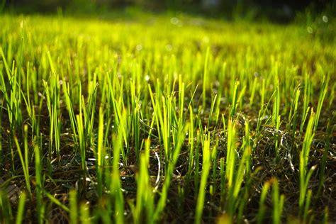 Fall Seeding Tips For Kansas City Homeowners