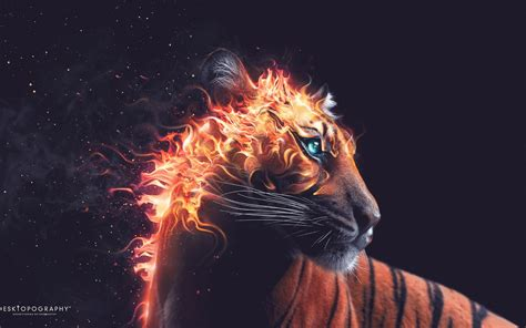 Detroit Tiger Wallpaper For Android Tiger Fire Wallpapers Hd Wallpapers Id 13883
