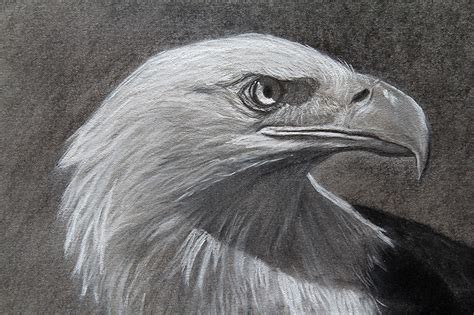 eagle drawing  original  sale   draw
