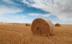 Pics of Round Bales of Hay Wallpaper