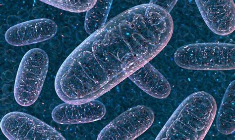 Mitochondria Behind Blood Cell Formation