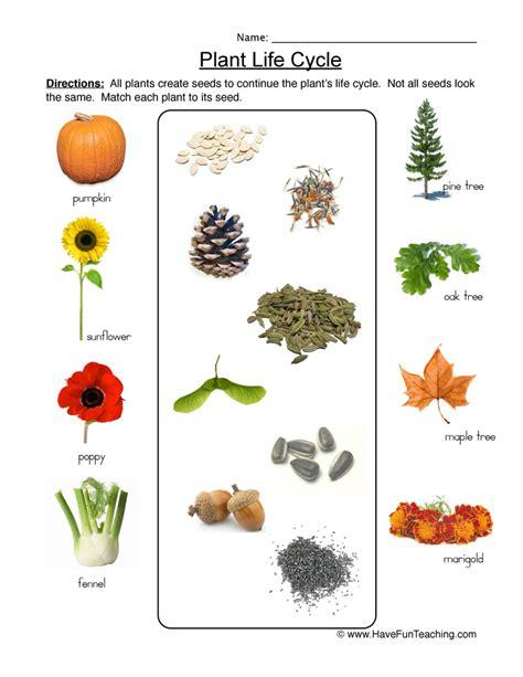 plants habitat worksheets for grade 1 homeshealth info