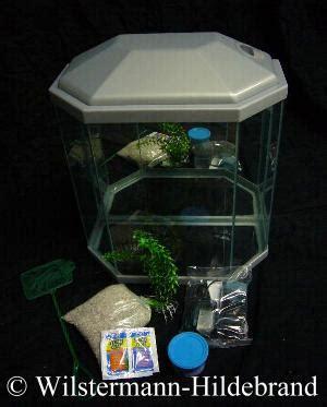wie warm muss ein aquarium sein wie warm muss ein aquarium sein paperbase site