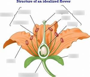Flower Function Quizlet