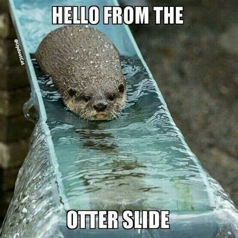 Animal Memes Clean - the 25 best hello memes ideas on pinterest hello meme funny hello movie and gandalf funny