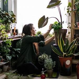 Zimmerpflanzen Für Schlafzimmer : diese 6 zimmerpflanzen sind gut f r unsere gesundheit ~ A.2002-acura-tl-radio.info Haus und Dekorationen