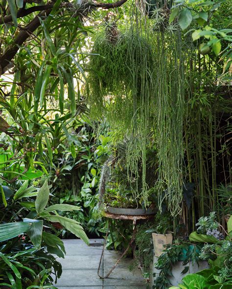 outdoor garden plants greening your space plant trends and tips