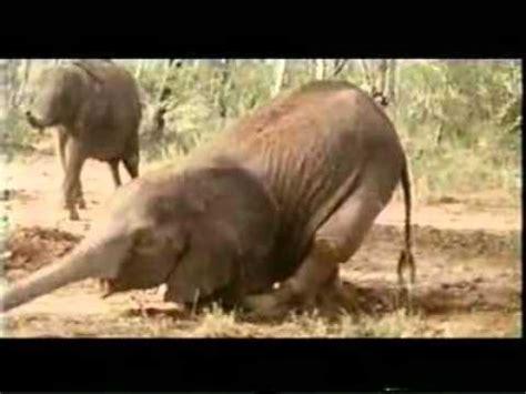 lustige tiere besoffene tiere youtube