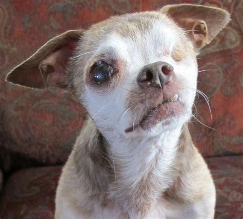 puppy mills adopt dont shop talent hounds