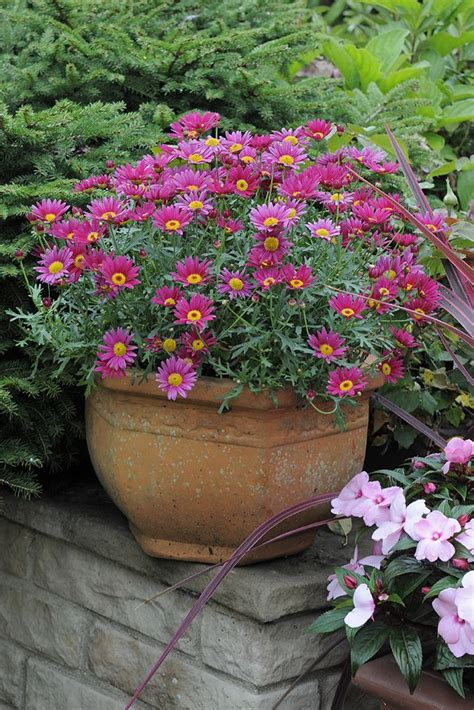 55 Best Plant Pots And Containers Images On Pinterest