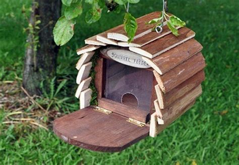 unbelievable squirrel house designs