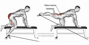 Kneeling Cable Hip Extension