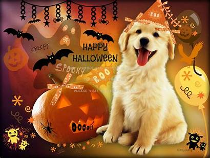 Halloween Puppy Wallpapers Party Boo Animal Lights