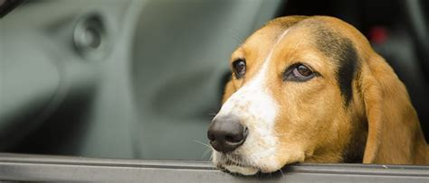 Choosing The Right Car Restraint For Your Dog