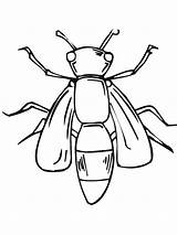 Coloring Fly Swatter Template Insect Giant sketch template