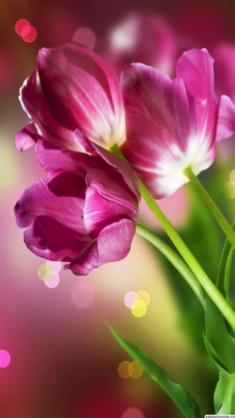 pictures  beautiful flowers wallpapers wallpapertag