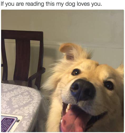 dogs  happy theyll   happy  cutesypooh
