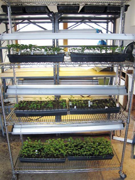 lights for seedlings starting seeds indoors under fluorescent lights garden org