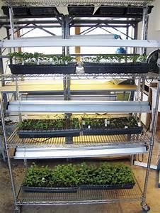 starting seeds indoors fluorescent lights garden org