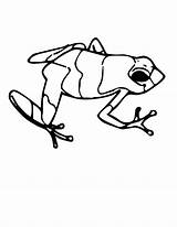 Frog Dart Coloring Poison Tadpole Pages Clipart Jumping Drawing Tree Leaping Simple Frogs Animals Realistic Sheet Drawings Pencil Getdrawings Clipartmag sketch template