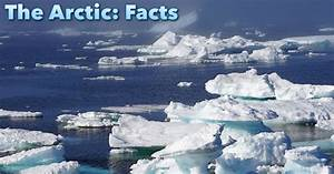The Arctic Facts For Kids Information Pictures U0026 Video