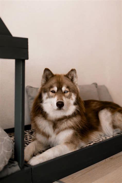 Hundehütte Für Die Wohnung by Hundeh 252 Tte F 252 R Die Wohnung Fkh