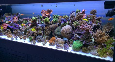 pur pas par in aquarium reef planted lighting led
