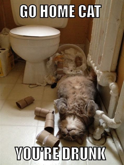 Drunk Cat Meme - go home you re drunk makes me laugh pinterest cat funny stuff and humor