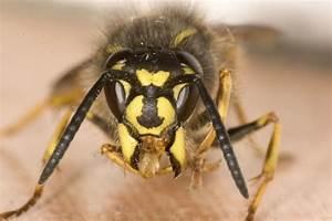 Bienen Vertreiben Essig : das ist der genialste trick gegen wespen eine papiert te mehr brauchst du nicht haushalt ~ Whattoseeinmadrid.com Haus und Dekorationen