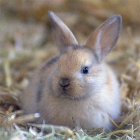 kaninchen tierschutzverein gross essen ev