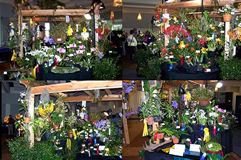 show and sale atlanta orchid society