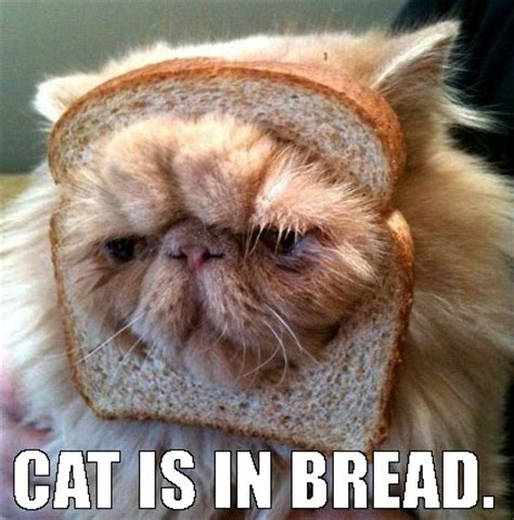 Cat In Bread Meme - shy smiley face maze and funny cats and caricature casino tips canada image 3544528 by