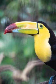 endangered species  belize animals momme