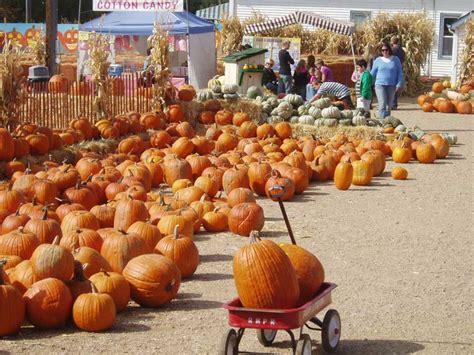 Curious George Halloween Boo Fest Watch Online by 100 Pumpkin Patch Near Austin Tx 8 Charming Pumpkin