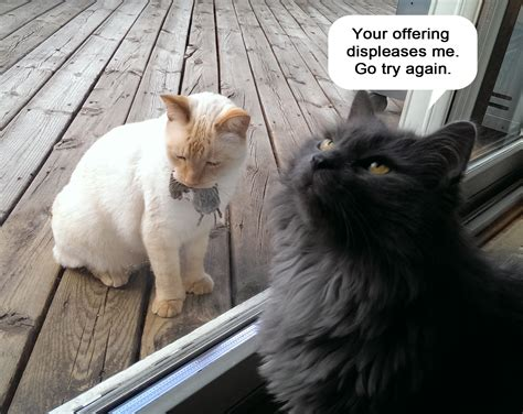 funny pictures  cats  captions
