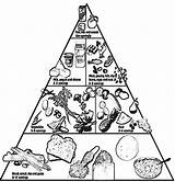 Pyramid Coloring Healthy Nutrition Printable Clipart Groups Foods Teaching Basic Cooking Tips Lunchbox Eating Popular Health Coloringhome Library Active sketch template
