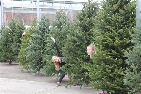 cut christmas tree care wilson s garden center