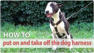 How To Put On And Take Off The Dog Harness