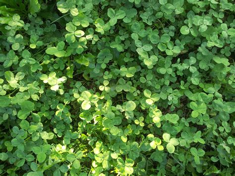 images gratuites la nature feuille fleur printemps