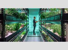 Hydroponics Inhabitat Green Design, Innovation