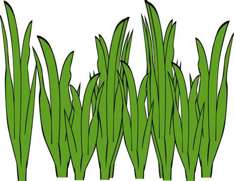 Seagrass Clip Art At Clker.com