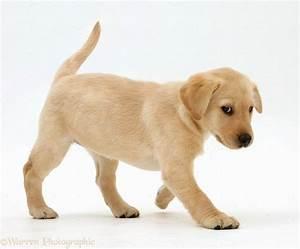 Walking a puppy puppies puppy for Puppy dog walker