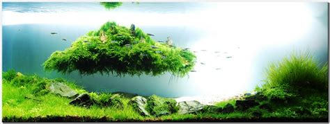 Japanese Aquascape by Floating Island In The Aquarium