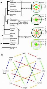Comparative Transcriptomics Among Floral Organs Of The