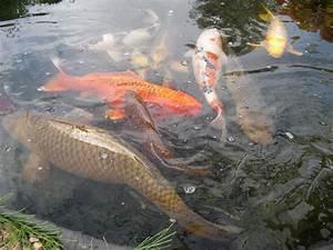Bassin De Jardin Pour Poisson : bassin poisson exterieur fashion designs ~ Premium-room.com Idées de Décoration