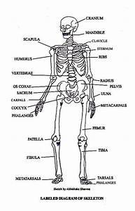 Pictures Of Bones