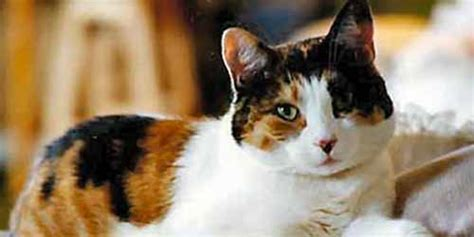 calico names unique calico cat names 44 perfect names to check out