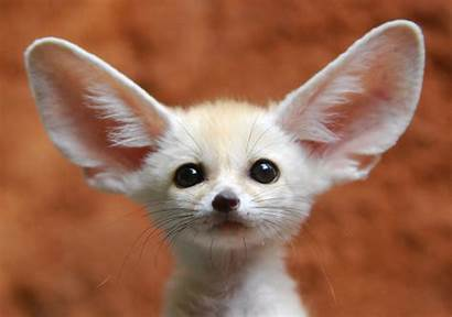 Exotic Pets Would Animals Pet Animal Foxes