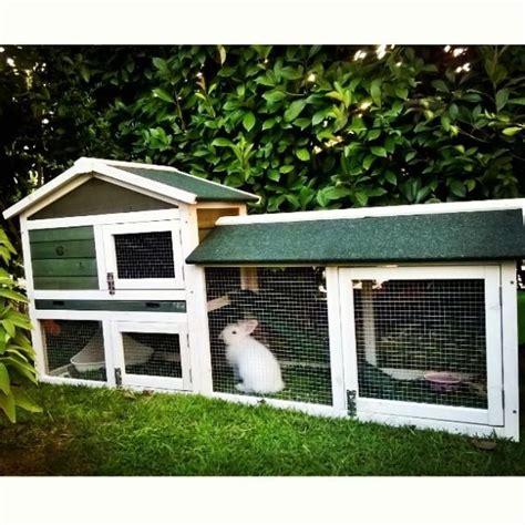 gabbia per coniglio la convivenza tra conigli ecco come gestirla