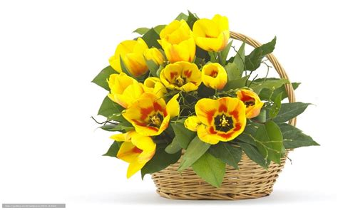panier de basket de bureau tlcharger fond d 39 ecran nature fleurs fleur panier fonds